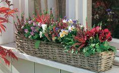 Einfach, aber wirkungsvoll: Man nehme nur wenige Zutaten, fertig ist der perfekte Terrassenschmuck. Die bunte Palette aus knospenblühender Besenheide 'Liliane' und Hornveilchen bleibt wochenlang in Blühlaune