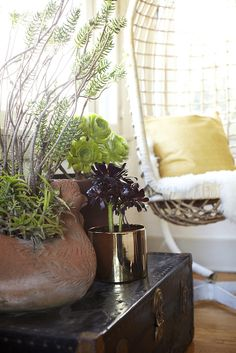 Instead of decorating with fake flowers, use plants that are supereasy to keep!