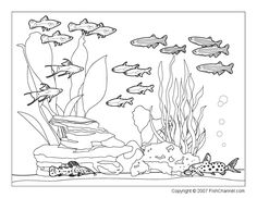 Printable Fishchannel Coloring Page Community Tank
