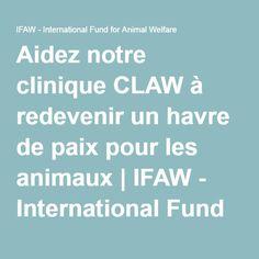 Aidez notre clinique CLAW à redevenir un havre de paix pour les animaux | IFAW - International Fund for Animal Welfare