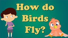 How do Birds Fly for Children.  Explains how the shape of the wings and the weight of a bird helps it fly.