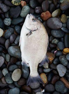 Fresh-caught chita (Peruvian grunt fish) at the Miraflores beach area of Lima - Condé Nast Traveler