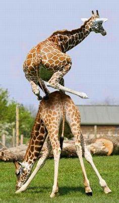 Animales grasiosos