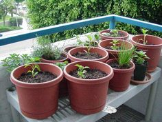 How To Vegetable Garden In Containers