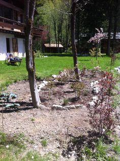 Aiuola rose clair matin peonie echinacee rimodellata maggio 14
