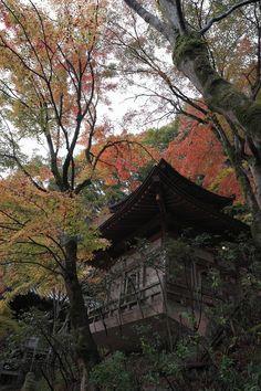 Atago-nenbutsudera~愛宕念仏寺~, Kyoto,Japan. Iberian Lynx, Japan Image, Wakayama, Shiga, Cherry Blossoms, Capital City, Osaka, Kyoto, Autumn Leaves