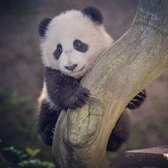Photo by San Diego Zoo.