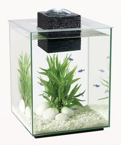 Another great find on #zulily! Fluval Chi 5-Gal. Aquarium Set by Hagen #zulilyfinds