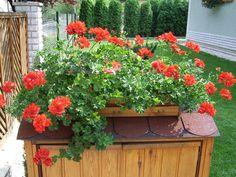Floral Drawing, Lawn, Backyards, Flower Arrangements, Landscaping, Vases, Garden, Colors, Verandas