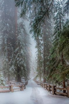 Hiver - neige *m Winter Sequoia Trees California Winter Love, Winter Snow, Winter Walk, Winter Green, Fall Winter, Winter Wonderland, Christmas Wonderland, Beautiful World, Beautiful Places