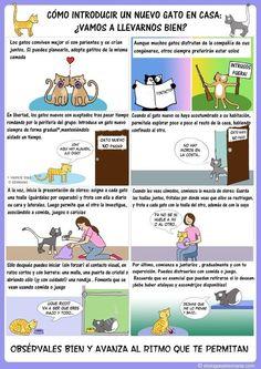 Junta a los dos gatos, de manera gradual y contigo presente. | 12 Infográficos prácticos que todo amante de los gatos necesita