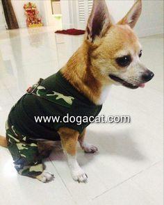 นององเปา ในชดเสอสนข ชดเอยมทหาร นารกมากๆคะ #reviewdogacat  line : dogacatthailand  www.dogacat.com FB : dogacat  Fanpage : dogacatthailand Instagram : dogacat  #dogacat #reviewdogacat #เสอผาหมา #เสอสนข #เสอหมา #เสอผาสนข #เสอแมว #เสอผาแมว #แวนตาสนข #รองเทาสนข #puppyclothes #petstagram #puppy #petclothes #petsofinstagram #dogstagram #dogoftheday #dogdress #dogdaily #dogapparel #dogclothes #dogcute  #dogshoes #doghat #chihuahua #shihtsulovers #shihtzu #shihtsugram #ปลอกคอสนข #หมวกสนข by dogacat…