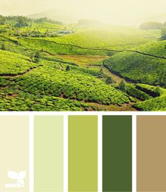 Color: Rolling Greens by Design Seeds - grey green, light green, lime green, forest green, medium beige.