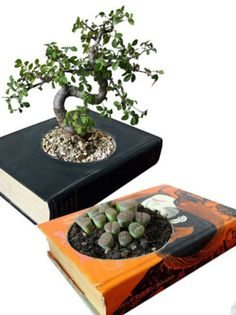 Books as planters. Love the bonsai Recycled Planters, Recycled Garden, Diy Planters, Garden Planters, Planter Ideas, Balcony Garden, Indoor Plant Pots, Potted Plants, Indoor Gardening