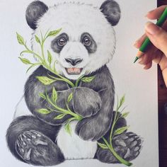Ghim của đá tảng trên draw for the love of drawing trong 2019 рисунки, идеи Panda Sketch, Panda Drawing, Animal Sketches, Animal Drawings, Art Sketches, Panda Love, Cute Panda, Panda Painting, Panda Wallpapers