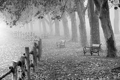 View the different ways people have colored the grayscale autumn park landscape from the Beautiful Nature grayscale adult coloring book. Autumn Nature, Autumn Trees, Fall Pictures, Fall Photos, Nature Images, Nature Photos, Garden Gates And Fencing, Fences, Photo Café