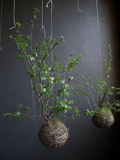 Moosbälle zum Aufhängen selber machen