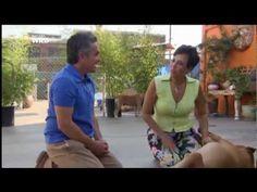 Der Hundeflüsterer Staffel 1 Folge 07 - Im Hundepark