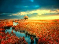 Amazing Nature via http://www.Fenvir.com blog