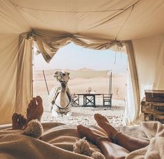Camel outside tent