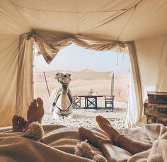 Camel outside tent
