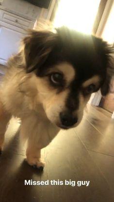 Cutest Dog On Earth, Calum 5sos, 5sos Pictures, 5sos Memes, Calum Thomas Hood, Summer Dog, 1d And 5sos, 5 Seconds Of Summer, Petunias