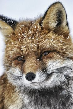 Baby Animals Photography Red Fox New Ideas Nature Animals, Animals And Pets, Baby Animals, Funny Animals, Cute Animals, Woodland Animals, Cute Creatures, Beautiful Creatures, Animals Beautiful