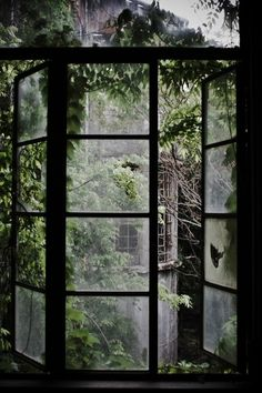 Garden through window. Both lovely.