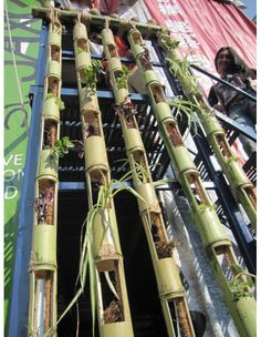 SBG thinks this is brilliant if you know someone who has a problem with invasive timber bamboo. Their solution is your budget solution. Vertical garden with bamboo. Cool, unique, twist on the vertical gardening trend Bamboo Planter, Bamboo Art, Vertical Planter, Bamboo Crafts, Bamboo Ideas, Bamboo Garden Ideas, Bamboo Light, Bamboo Poles, Bamboo Fence