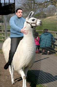 Image result for llama nerve Alpacas, Activities, Animals, Image, Animaux, Animal, Animales, Animais