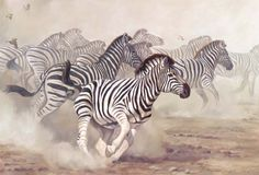 Skittish Zebra Herd by wildlife artist Lindsay Scott available from Snow Goose Gallery Wild Animals Pictures, Animal Pictures, Zebra Drawing, Zebra Decor, Wall Art Pictures, Wildlife Art, African Art, Mammals, Original Paintings