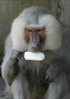 Animals Acting Like Humans | Fox News Magazine