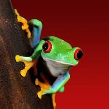 Resultado de imagen para tree frogs images