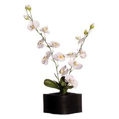 Orchid in Black Ceramic