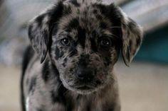 black pretty spotted puppy