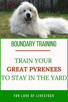 Neat summarized dog training commands look here Dog Training Methods, Dog Training Techniques, Training Your Dog, Training Classes, Brain Training, Potty Training, Pyrenees Puppies, Great Pyrenees Puppy, Anatolian Shepherd