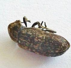 Death Watch Beetle Beetle, Death, Homes, Shape, June Bug, Houses, Beetles, Home, Computer Case