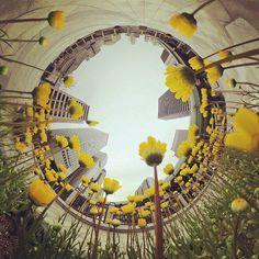 ゴールデンウィークは楽しめましたか 私は写真を撮り溜めましたよもちろん360度カメラで  #panomiru #パノミル #VR #follow #フォロー #フォロワー #instagood #instalike #instadaily #photooftheday #いいね #beautiful #きれい #cool #photo  #theta360 #littleplanet #tinyplanet #360カメラ部 #360camera #360度カメラ #タンポポ #flower #花 by panomiru Fair Grounds, Instagram Posts, Travel, Beautiful, Viajes, Destinations, Traveling, Trips