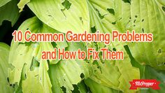 10 Common Gardening Problems and How to Fix Them