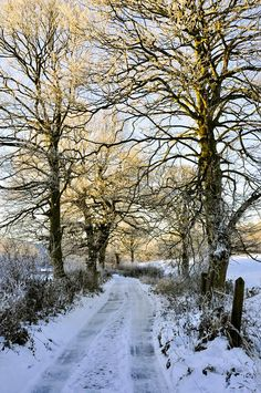 Country lane in winter - Hyde, England. Photo by Andrew Kearton. Winter Love, Winter Colors, Winter Snow, Winter Landscape, Landscape Art, Winter Plants, Painting Snow, Winter Scenery, Winter Sunset