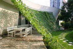Een zonnescherm gemaakt van klimplanten.