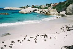 Cape Town South Africa next vacation