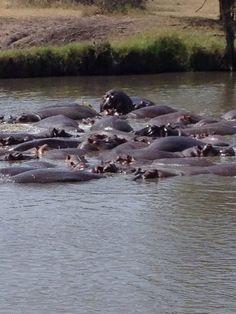 Hippo Pool, Tanzania