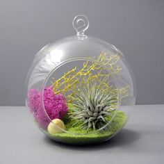 Gorgeous terrariums!  Perhaps the perfect accent when decorating our new home?  Lime // Air Plant Terrarium by seaandasters on Etsy. , via Etsy.