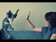 Oh, you need more high fives? How about a million* of them in this video: | This Video Of Cats Giving High Fives Will Make Everything Better