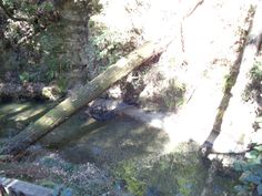 Relax in your creek side hammock in Scotts Valley.  A great first home or vacation get away!  Asking Price: $199,500
