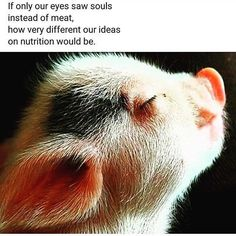 Ultimate funny animals funny zoo animals for children Animals And Pets, Baby Animals, Funny Animals, Cute Animals, Strange Animals, Reasons To Be Vegan, Vegan Quotes, Vegetarian Quotes, Vegan Vegetarian