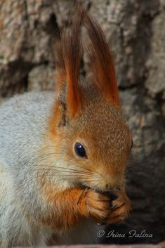 The squirrel eats sunflower seeds (1) - null