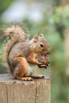 Image result for good morning message squirrel buying nuts