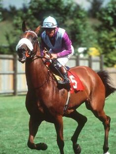 Lochsong, class sprinter and two times Cartier horse of the year.